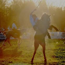 En noviembre se realizará una nueva edición del Festival del Ombú