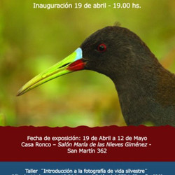 Este viernes se inaugura una muestra fotográfica de la flora y fauna del Partido de Azul